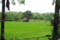 Setya Homestay Tanjung Lesung9